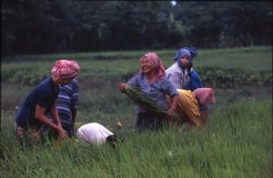 カンボジア-ある家族の夢