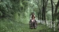『背徳の森』