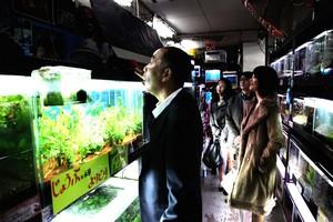 『冷たい熱帯魚』3