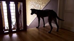 『犬を連れた女性』場面1