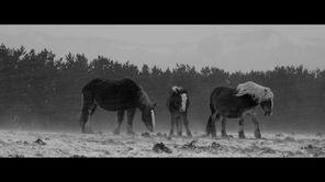 『馬ありて』場面画像1