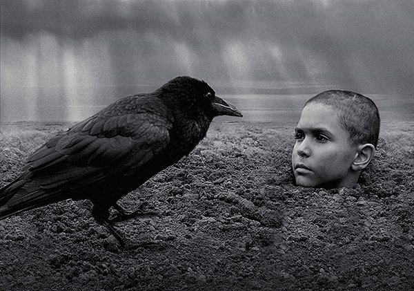 『異端の鳥』画像