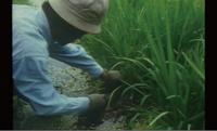 『自然農 川口由一の世界 1995年の記録』