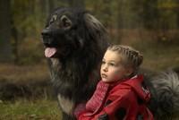 ムルと子犬