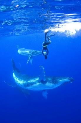 『ライフ―いのちをつなぐ物語―』ザトウクジラ