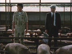 『八月の軽い豚』画像